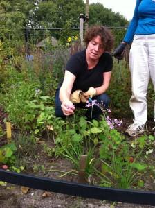 Hanneke vertelt dat je deze bloemetjes van de kaapse ... (?) op de sla kunt leggen